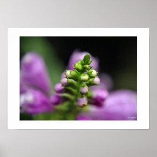 Fall Flower Buds Framable Print