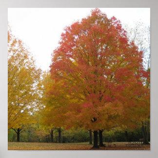 fall foliage2 poster
