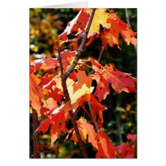 Fall Foliage 1 Card