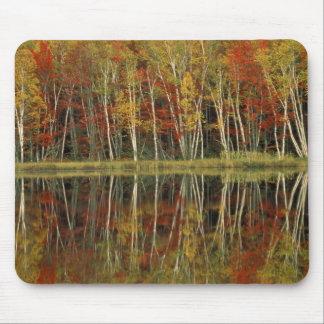 Fall Foliage and Birch Reflections; Hiawatha Mouse Pad