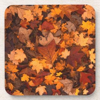 Fall-foliage Coaster