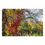 fall foliage in meredith new hamphire photo print