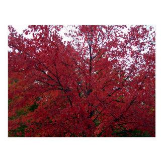 Fall Foliage in NH 2 Postcard