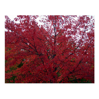Fall Foliage in NH 2 Postcards