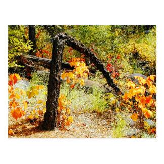 Fall Foliage, Jemez Mt. Trail, NM Postcard