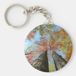 Fall foliage looking up 2 keychain