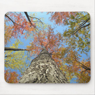 Fall foliage looking up mouse pad