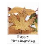 Fall Foliage Maple Leaf Post Cards