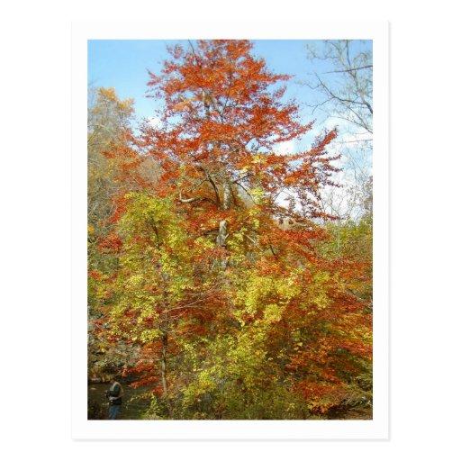 Fall Foliage Postcards