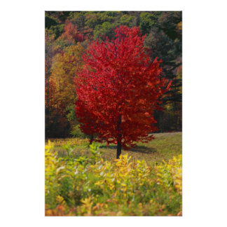 Fall Foliage Posters