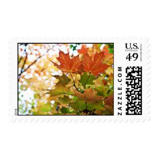 Fall Foliage Stamps