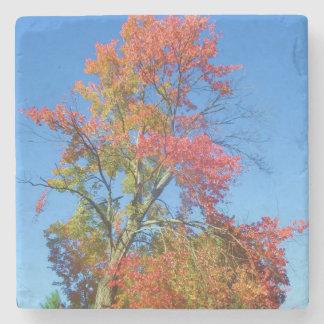 Fall Foliage Stone Coaster