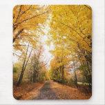Fall Foliage Walking Path Mouse Mats