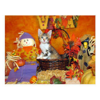Fall for Tippy - Postcard