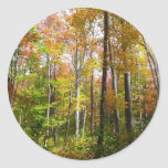 Fall Forest I Autumn Landscape Photography Classic Round Sticker