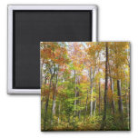 Fall Forest I Autumn Landscape Photography Magnet