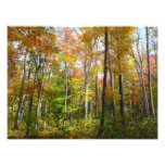 Fall Forest I Autumn Landscape Photography Photo Print