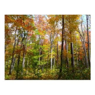 Fall Forest I Autumn Landscape Photography Postcard