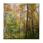 Fall Forest I Autumn Landscape Photography Tile