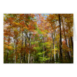 Fall Forest II Autumn Landscape Photography Card