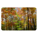 Fall Forest II Autumn Landscape Photography Magnet