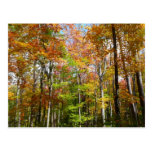 Fall Forest II Autumn Landscape Photography Postcard