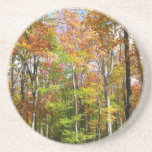 Fall Forest II Autumn Landscape Photography Sandstone Coaster