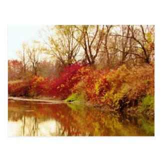 Fall Forest River Scene Postcard