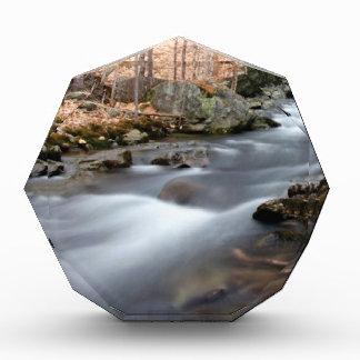 fall forest stream award