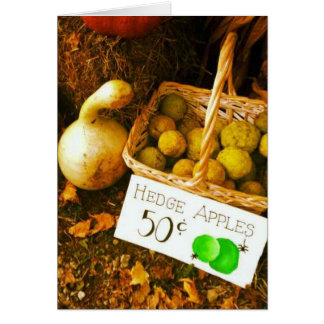 Fall Fruit Scene Card
