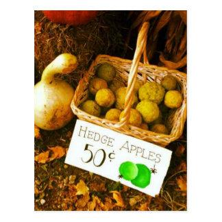 Fall Fruit Scene Postcard