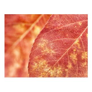 Fall Glory Postcard