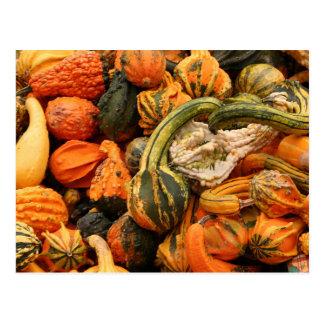 Fall Gourd Background Postcard