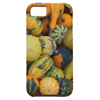Fall Gourds I iPhone SE/5/5s Case