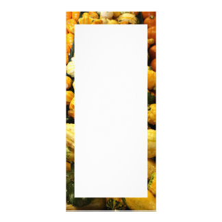 Fall Gourds Rack Cards
