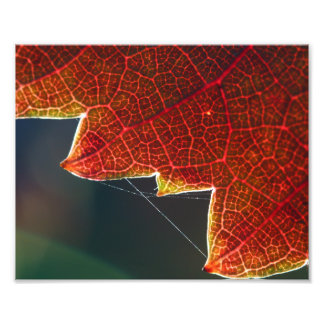 Fall Grape Leaf and Web Photo Print