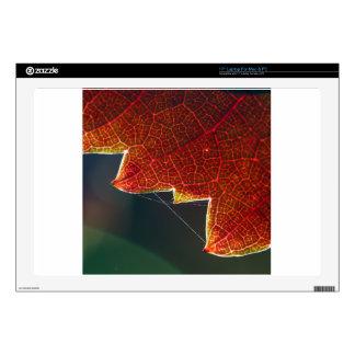 "Fall Grape Leaf and Web 17"" Laptop Skins"