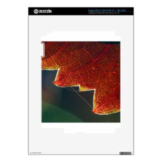 Fall Grape Leaf and Web Skins For iPad 3