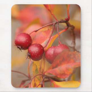 Fall Harvest mousepad