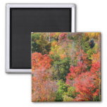 Fall Hillside Colorful Autumn Nature Photography Magnet
