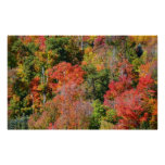 Fall Hillside Colorful Autumn Nature Photography Poster