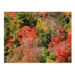 Fall Hillside Postcard