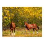 Fall Horses Postcard