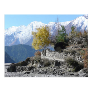 Fall in Nepal picture Postcard