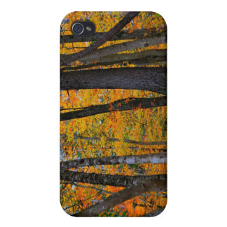 Fall in New England  Case For iPhone 4