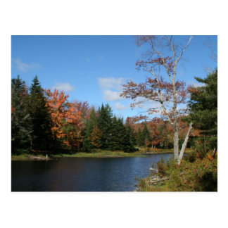Fall in New England Postcard