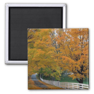 Fall in New Hampshire Magnet