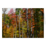 Fall in the Forest Colorful Autumn Photography Card