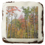 Fall in the Forest Colorful Autumn Photography Chocolate Brownie