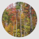 Fall in the Forest Colorful Autumn Photography Classic Round Sticker